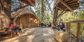 microsoft s new tree houses are office spaces in the woods