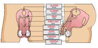 100 wiring diagram for l14 30 plug l14 30 wire diagram