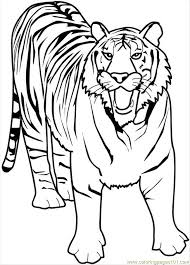 Bengal Tiger Coloring Pages 562879 Coloring Pages Tiger