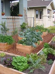 best 25 home vegetable garden ideas on pinterest home vegetable