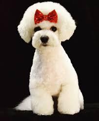 grande style pet grooming dog grooming pet grooming