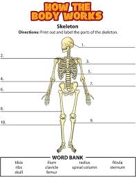 best 25 skeletal system worksheet ideas on pinterest skeletal
