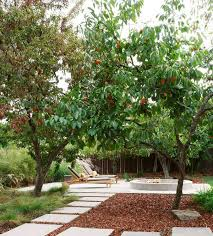 Backyard Fruit Trees How To Decorate Your Home With Fruits And Vegetables