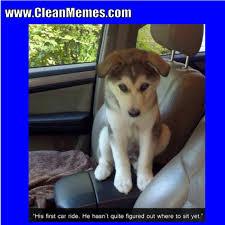 Clean Animal Memes - animal memes clean 2017 mne vse pohuj