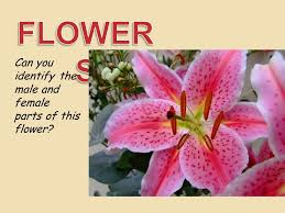 Identify Flowers - plant systems 7th grade science ppt video online download