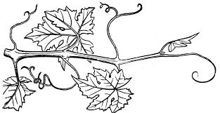torbert blog grape vine