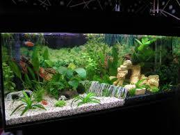 aquarium decorations indoor ideas for aquarium décor with white sand ideas for aquarium