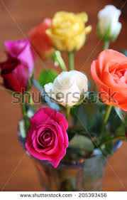 different color roses different color roses stock images royalty free images vectors
