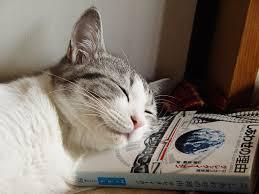 pets3000 com hills prescription diet cat food