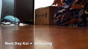 Laminate Flooring Next Day Delivery Live Fish Unboxing From Next Day Koi Youtube