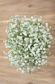 bulk baby s breath new gypso 200 240 stems for 209 from flower explosion new