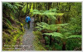 a walk in the woods a walk in the woods u2013 wood creek track coastingnz