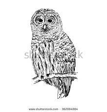 owl sketch hand drawn vector illustration stock vector 362084804