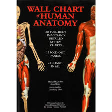 Human Anatomy Full Body Picture Wall Chart Of Human Anatomy