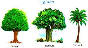 plants around us big small plants shrubs herbs water plants