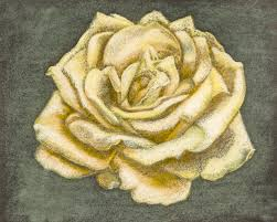 clearance giclee print yellow rose original pastel