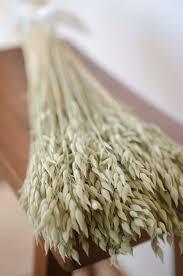 wedding oats dried oats dried aveeno oat bunch oat green grains