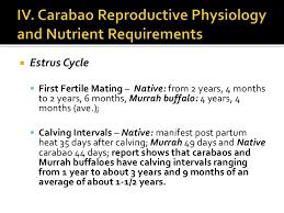Sheep Gestation Table Carabao Production