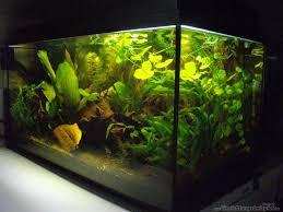 ytong wohnzimmer aquarium unterschrank bauen ytong aquarium unterschrank