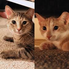 regina cat rescue home facebook