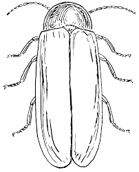 fresh firefly coloring coloring book 8916 unknown