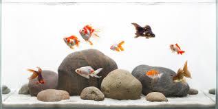 Aquascape Designs For Aquariums I Love This Goldfish Aquascape Pretty Goldies Too My Favourites