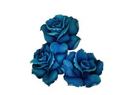 blue rose with banner tattoo design by gemma von spike