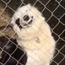 Smiling Dog Meme - beware of smiling dog cutesypooh