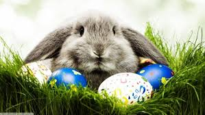 easter eggs wallpapers animals rabbits easter eggs wallpapers hd desktop and mobile