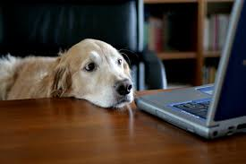 digital veterinary marketing trends for 2015 tips you need to