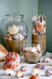 how to clean seashells sea urchins and coral the florida living