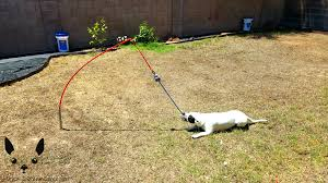 have an energetic dog with high toy drive tether tug is for them