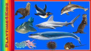 lets learn names of sea animals peekaboo toys fun learning water
