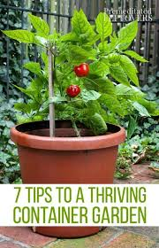 3251 best growing things images on pinterest small gardens