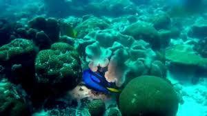 christmas island coral reefs i youtube
