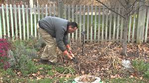 winter preparation for your garden what to do