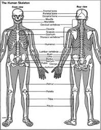Directional Terms Human Anatomy Skeletal Series A The Biological Basis Of Bone And Anatomical