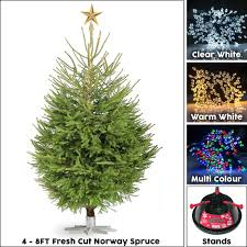 gardenersdream real norway spruce live christmas tree traditional