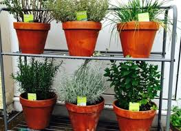 best 25 hanging wall planters ideas on pinterest wall herb dunneiv