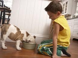 12 tips for pet decorating diy