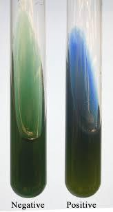 simmons citrate agar microlab 4 biochemistry u0026 metabolism