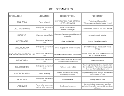 organelle with its function bing images biology pinterest