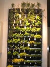 indoor wall herb garden the gardens