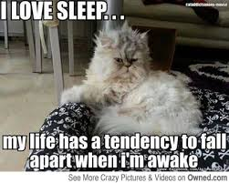 Sleeping Cat Meme - college life as told by cats