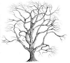 pix for pencil sketches of oak trees tree sketches