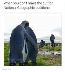 Funny Penguin Memes - awwwpinterest briizalls jovial jollies pinterest animal