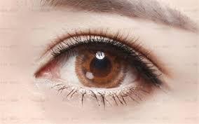 Professional Eyelash Extension False Eyelashes Sets Professional Eyelashes Extension Eye