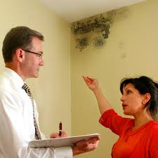 mold removal los angeles mildew removal remediation