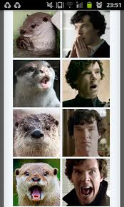 Cumberbatch Otter Meme - original meme posted by a fan wish i had thought of it but it s not