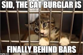 Jail Meme - cat jail meme generator imgflip